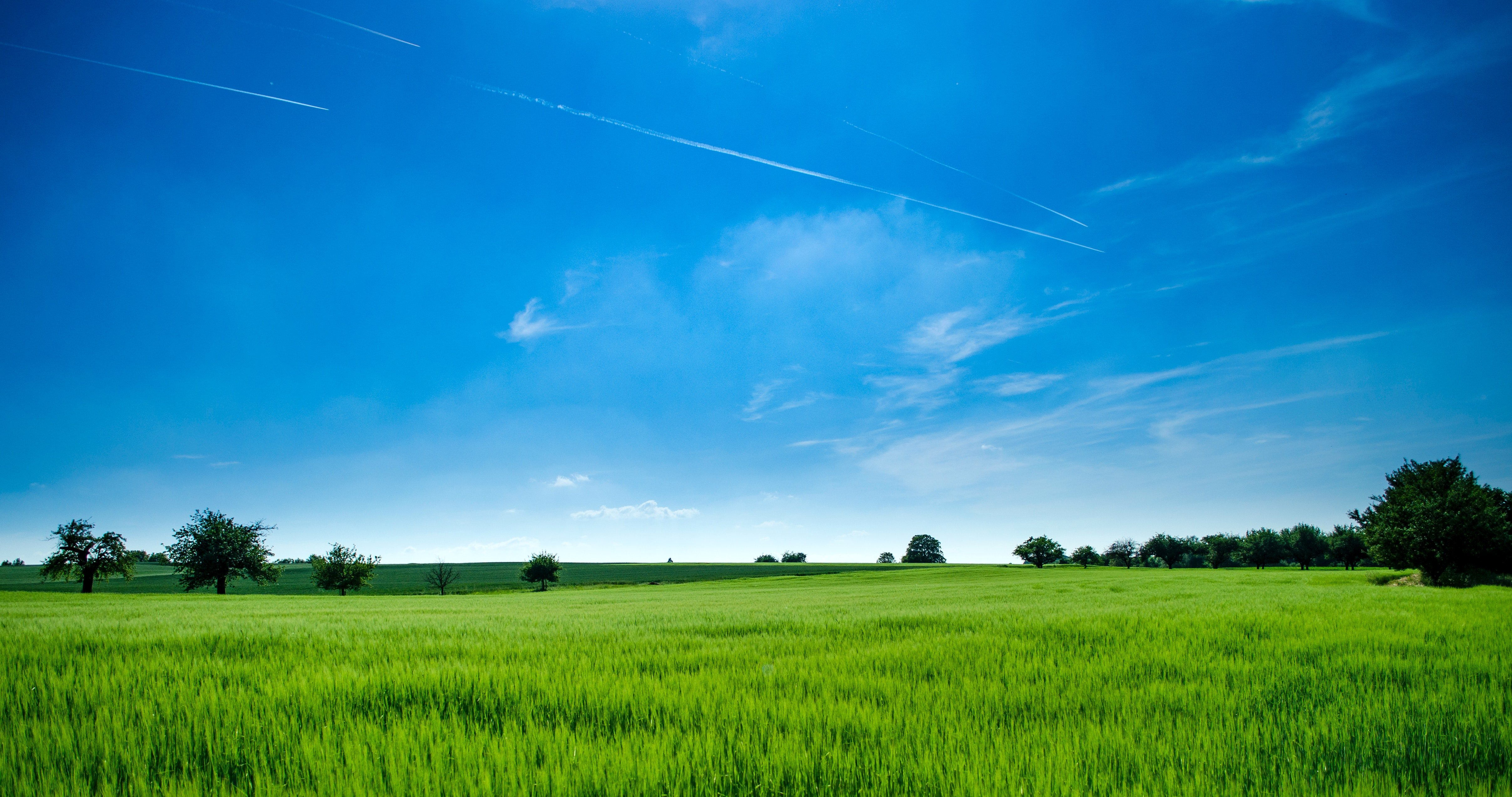 Photo - A photo of a green field and a clear blue sky |  Source: Pexels