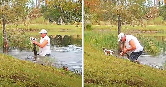 Florida Resident Saves His Puppy from an Alligator's Jaws — See the Video