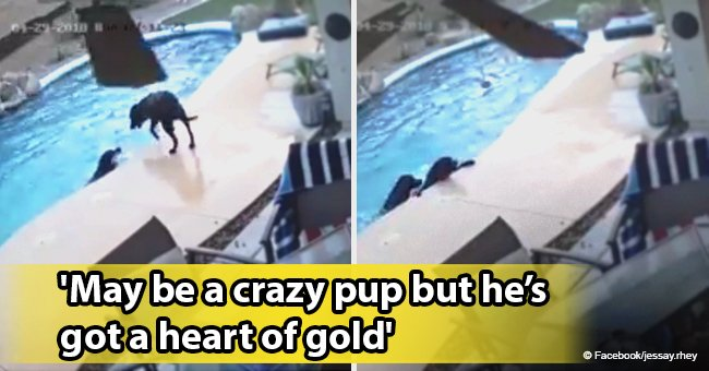 Video of heroic dog rescuing his canine buddy from drowning in pool still melts hearts