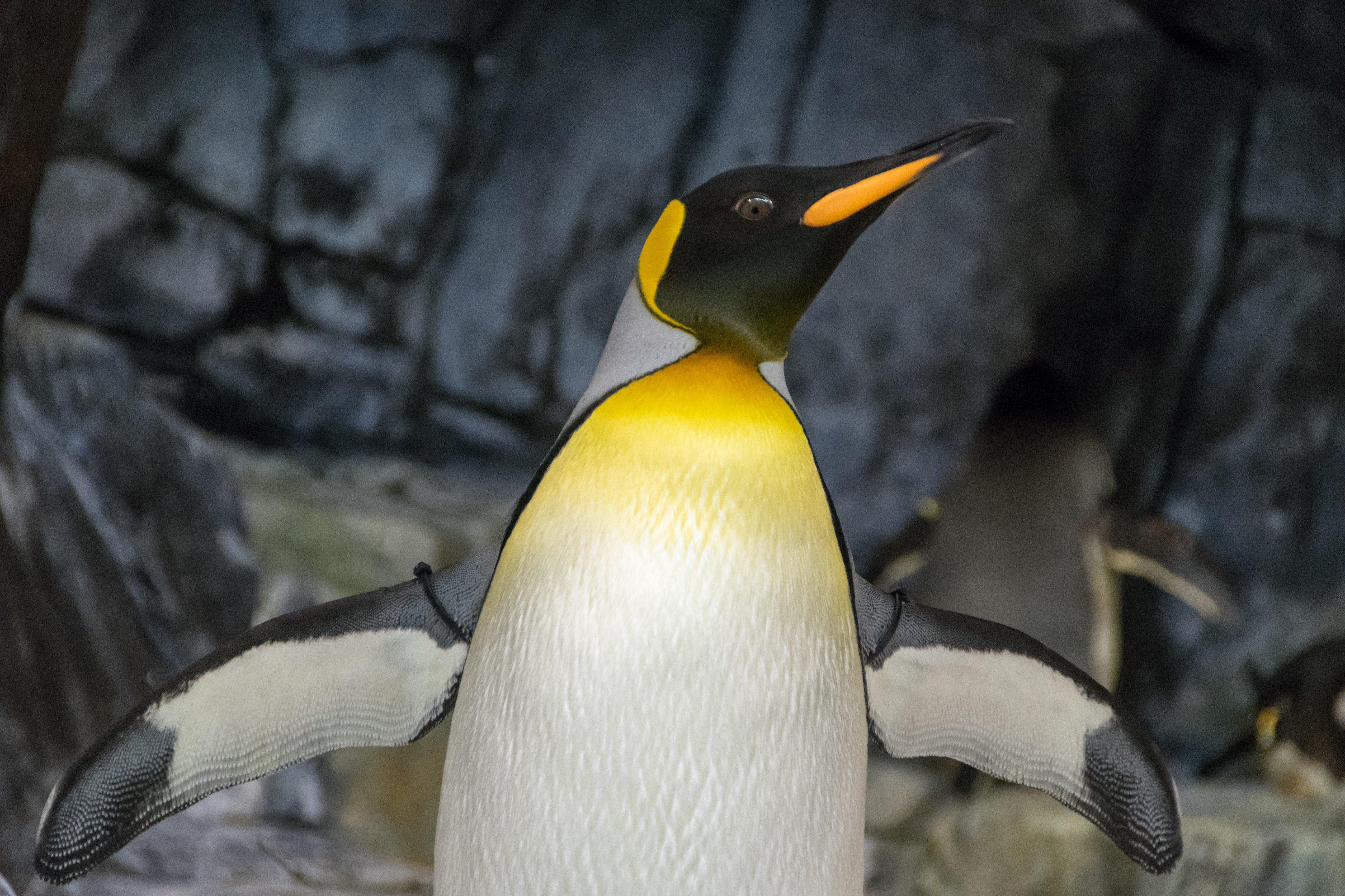 A yellow and black penguin. | Photo: Pexels/ Uncoated