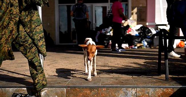 Huracán Dorian: unos 220 perros y 50 gatos murieron en refugio de Bahamas por las inundaciones