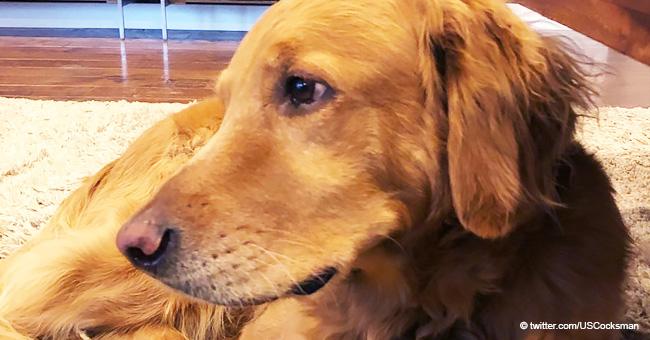 """""""Las hojas en llamas y brasas estaban por doquier"""": cómo un perro leal salvó a su familia del fuego"""