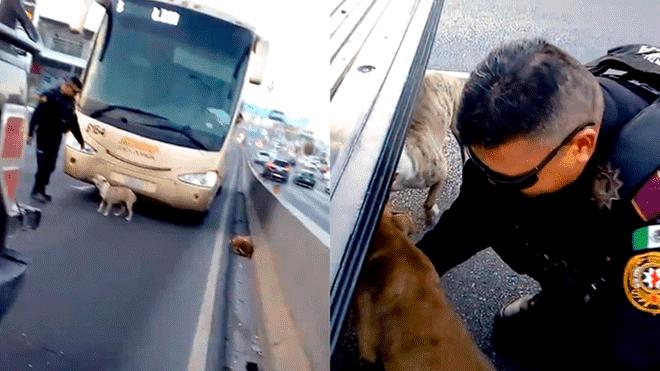 Policía rescatando a los perros| Foto: YouTube/Cendri Llion