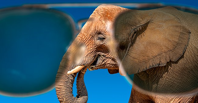 The tour guide asked the tourists to beware of elephants wearing sunglasses.   Photo: Shutterstock