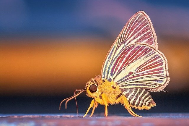 A moth with colorful wings | Photo: Pixabay