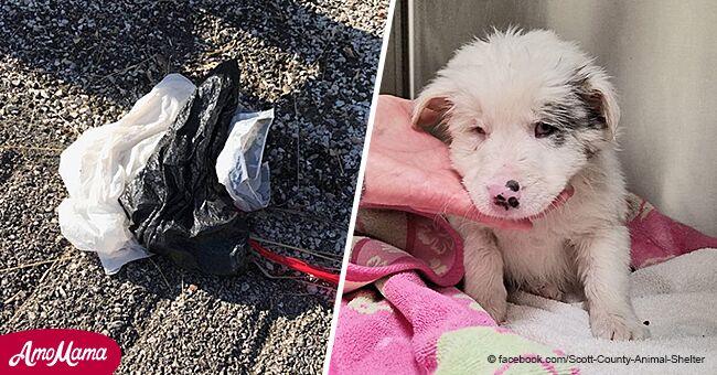 Dos hombres heroicos rescataron a cachorrita de bolsa de basura con pesos en lago helado