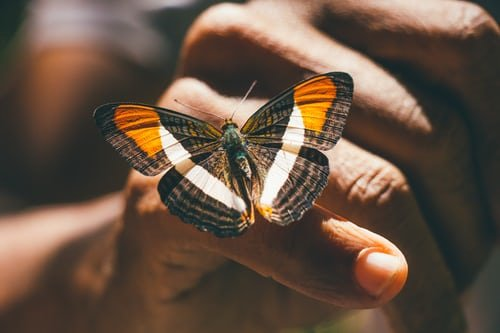 Elizabeth took her mother to a butterfly sanctuary | Source: Unsplash