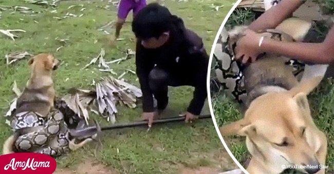 Eine große Schlange überfällt den Hund, aber mutige Kinder sind bereit, für ihren Freund zu kämpfen
