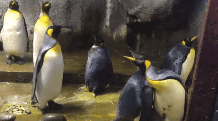 Source: YouTube/Odense Zoo