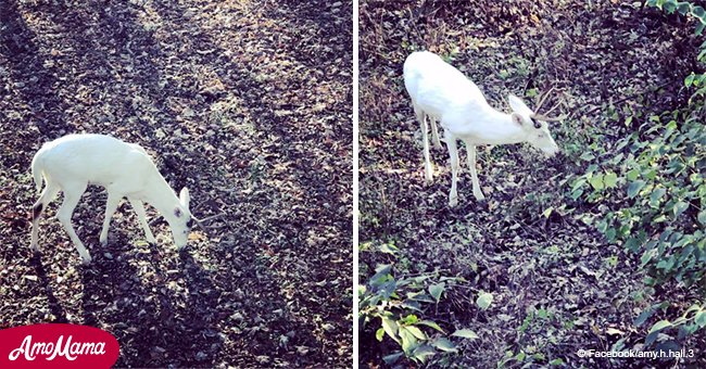 Hunter 'teared up and totally amazed' at spotting a rare 'ghostly' albino buck