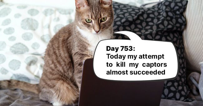 Daily Joke: Cat Keeps a Diary of His Carefree Life