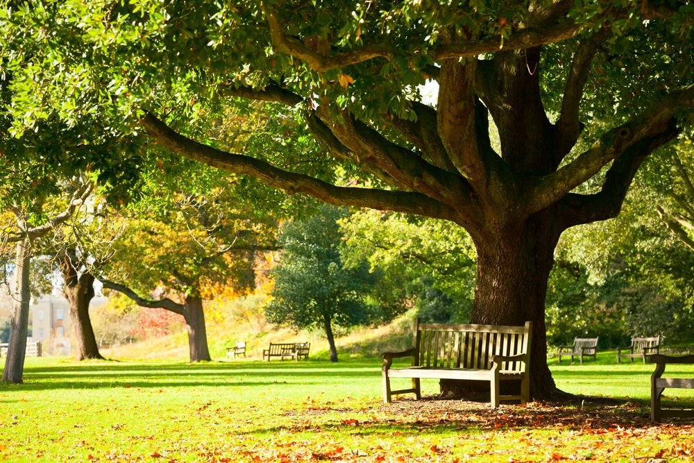An empty park full of trees. | Source: Shutterstock
