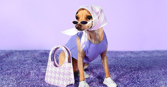 Stylish Dog Boobie Billie Brings Chic Style to the Masses — Discover Her Accessories Line for Humans