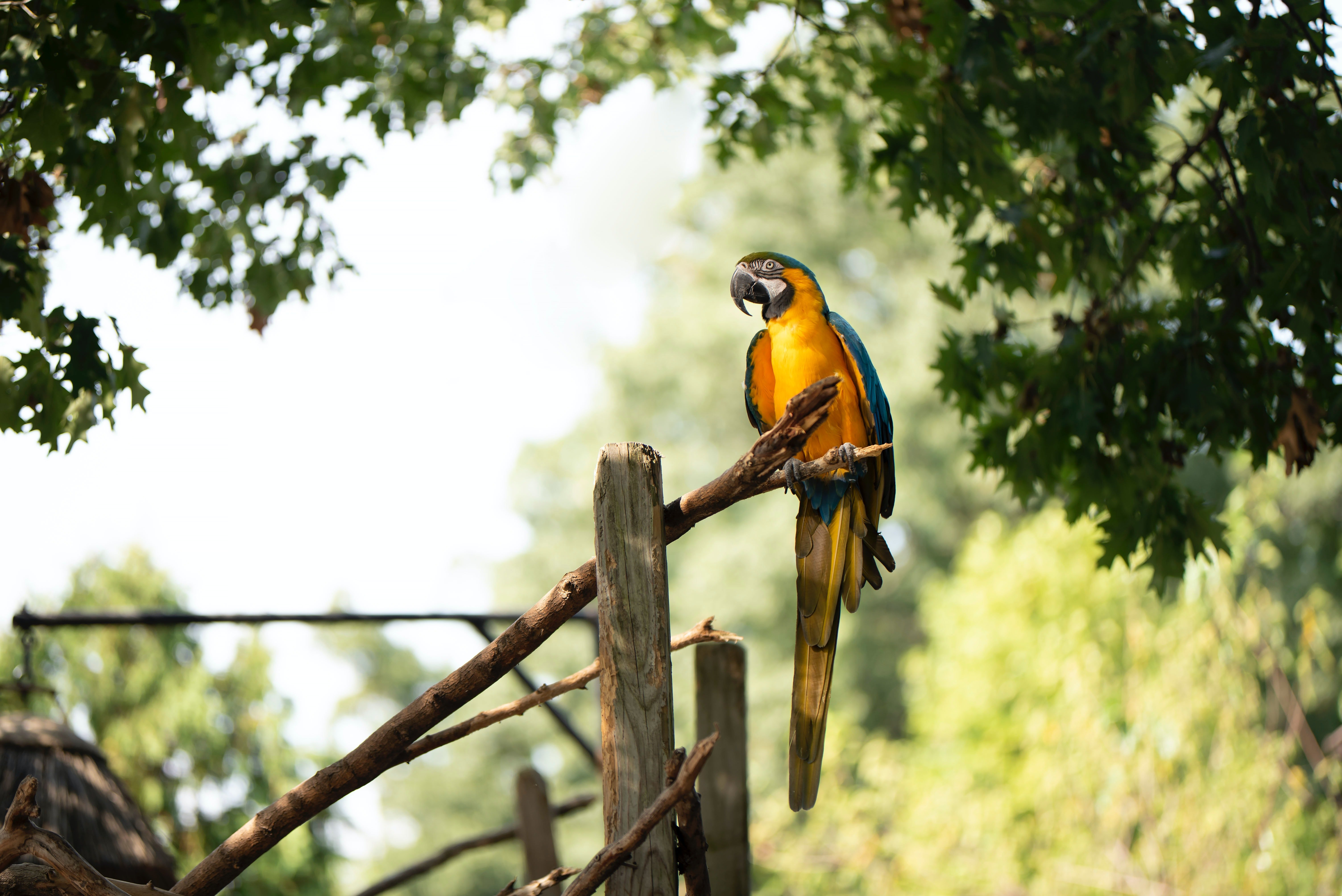 A yellow and blue parrot perched on a branch.   Pexels/ Julissa Helmuth