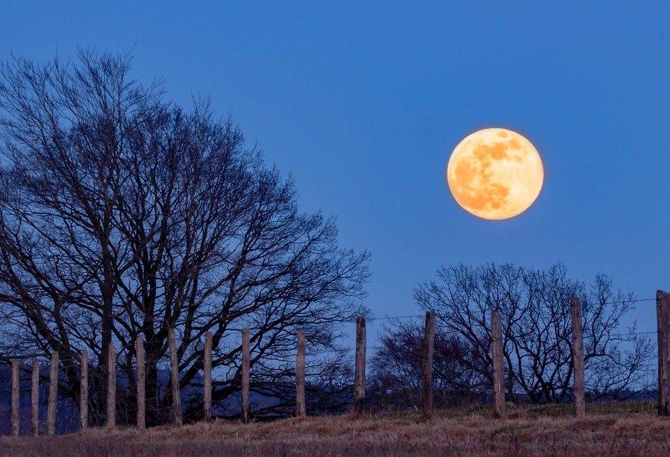 Árboles y luna llena. | Foto: Pixabay