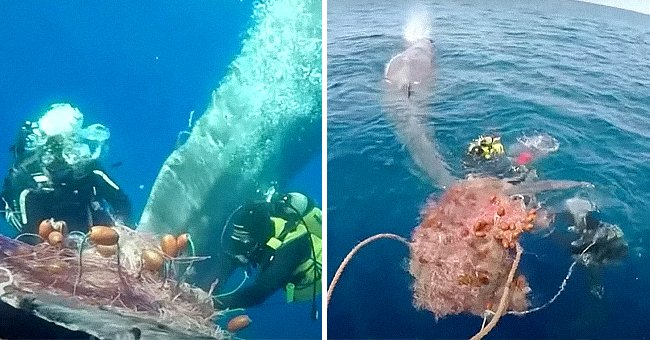 Whale tries to escape from net | Photo: Youtube/Reuters