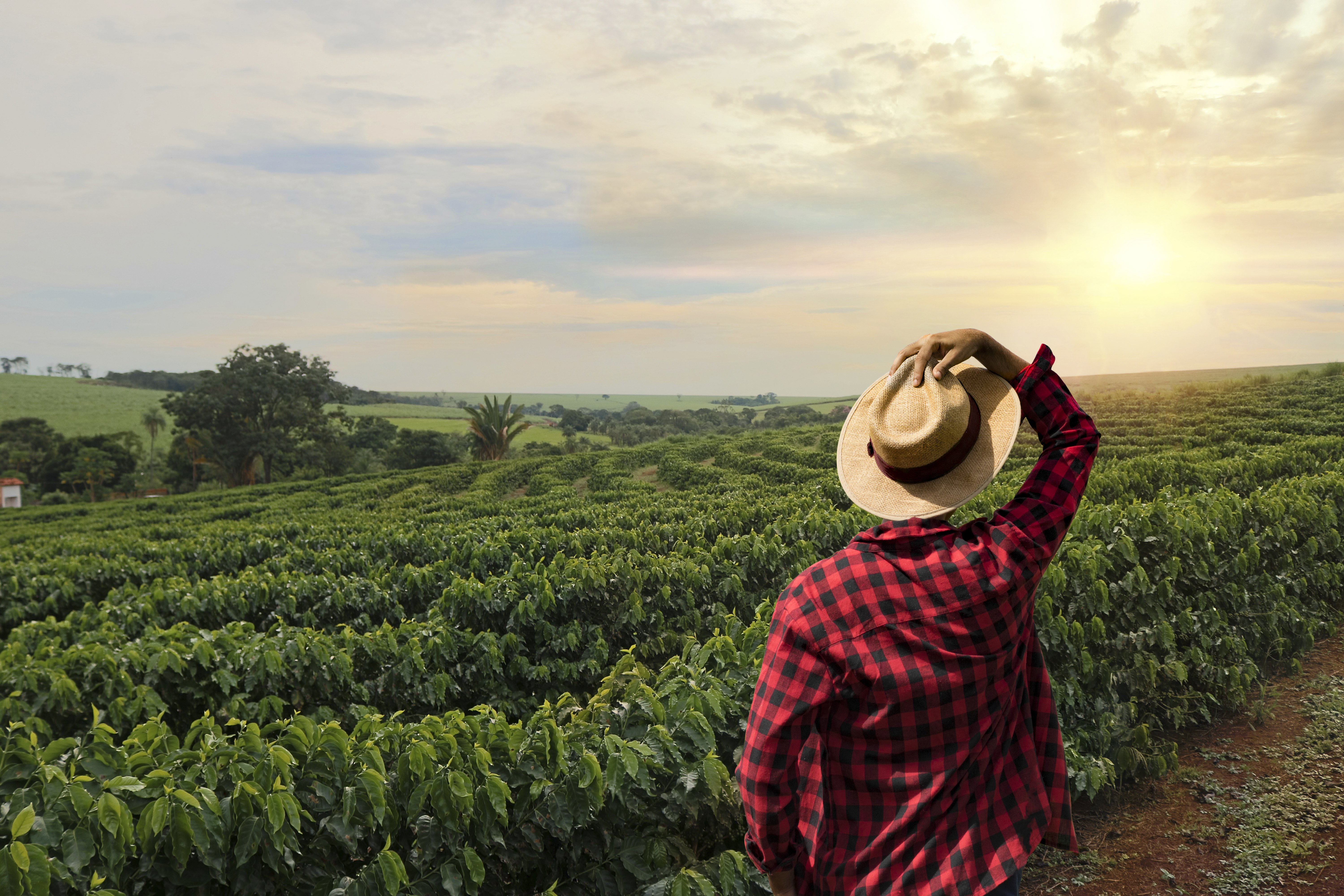 Farmer working on coffee field at sunset outdoor | Photo: Shutterstock.com