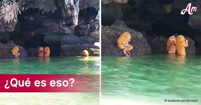 Aquí está la verdadera historia del video del encuentro de turistas con 'criaturas de otro planeta'