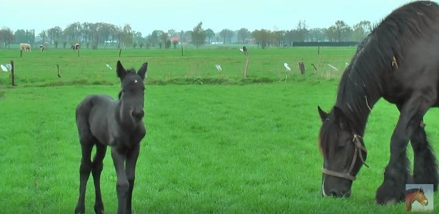 Source: YouTube/ Very Cute Baby Horses with their Mother