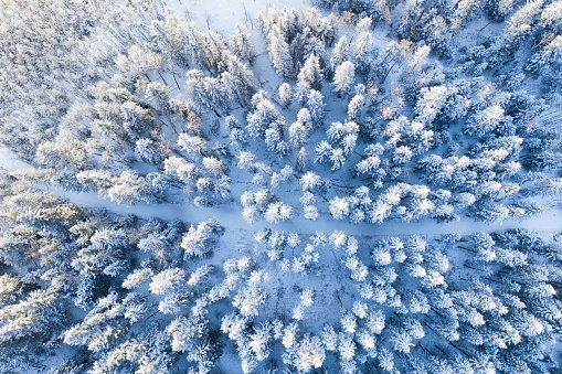 Snow covered treetops in forest, Alberta, Canada | Photo: Getty Images