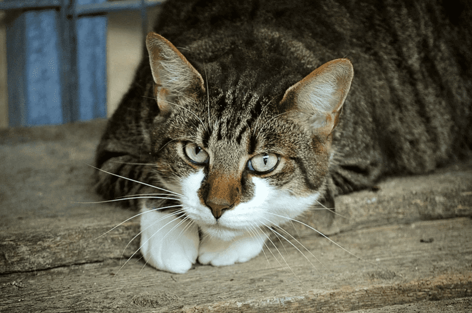 A cat resting on a wooden frame | Photo: Pixabay