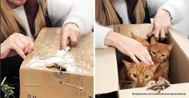 Historia del rescate de un adorable grupo de gatos abandonados en cajas selladas en la calle