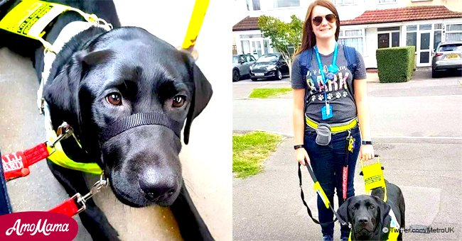On a demandé à une femme aveugle de descendre du bus 'parce que son chien guide était noir' et non jaune