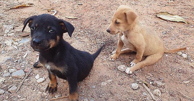 2 malinois et leurs 7 chiots, sauvés après avoir été enfermés pendant 10 jours