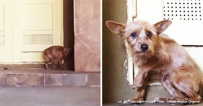 Dog is terrified when she meets her rescuer, but in a short time becomes unrecognizable