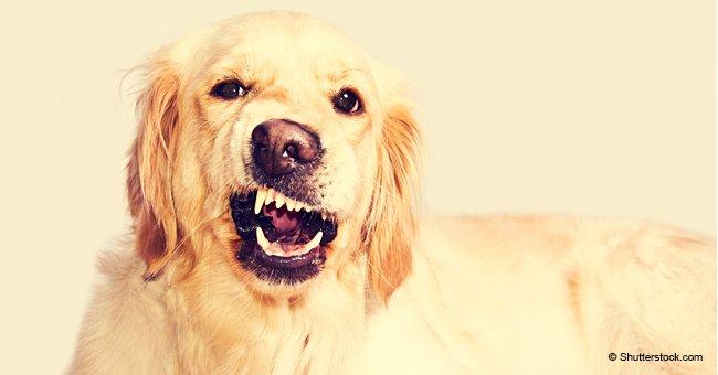 Les chiens doivent rester silencieux: le maire de l'Oise prend l'initiative officielle pour les empêcher d'aboyer
