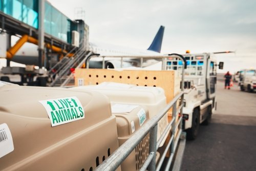 Boxes with live animals at the airport. | Source: Shutterstock