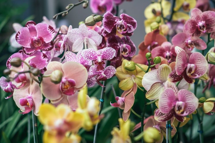 A photo of an orchid flower. | Photo: Unsplash