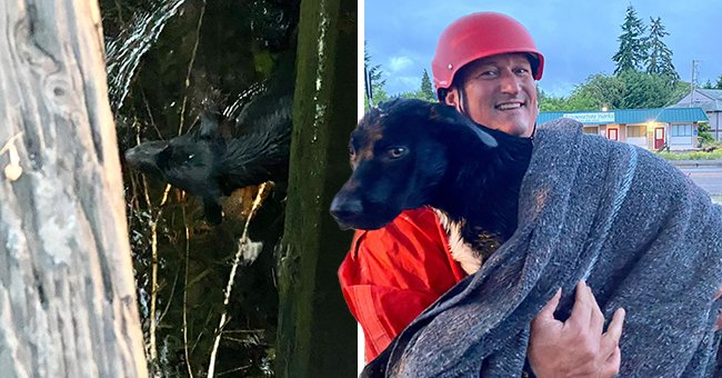 Oregon Firefighters Helped an Injured Dog Reunite with His Family by Pulling Him Out of a Canal