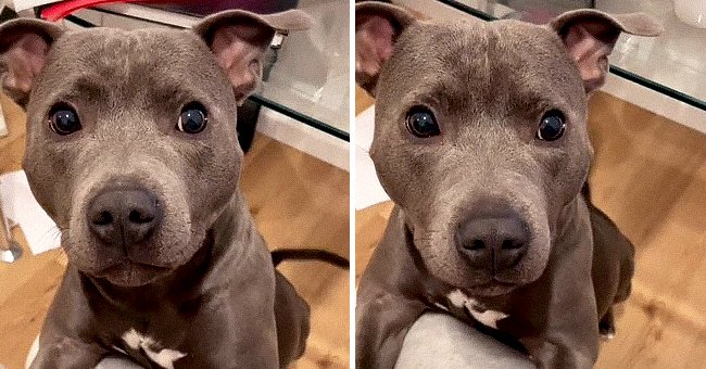 Adorable Dog Responds to Being Called Beautiful in a Sweet Video