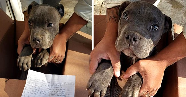 A dog was left in a box outside a shelter and was discovered by shelter workers along with a handwritten letter | Photo: Facebook/apadrinaxollines