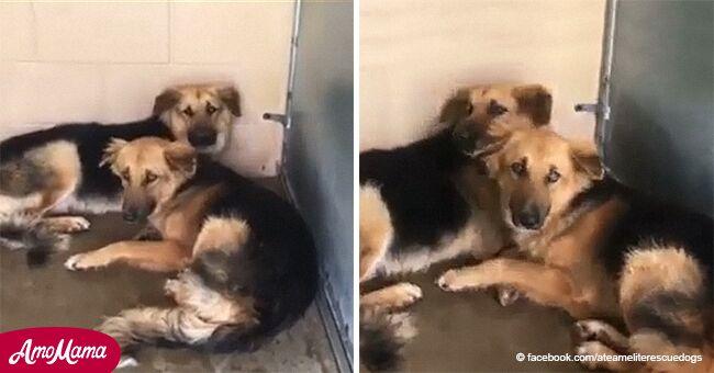 Una conmovedora historia de perros abandonados aterrados que se negaban a dejar de abrazarse