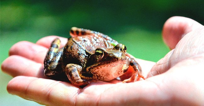 Photo of a frog on a human's palm | Photo: Shutterstock.com