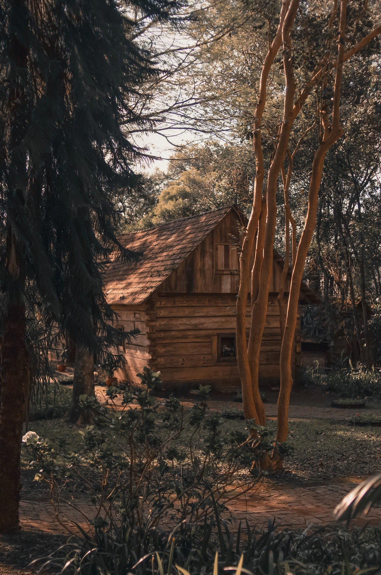 Photo of a cabin in the woods | Photo: Pexels