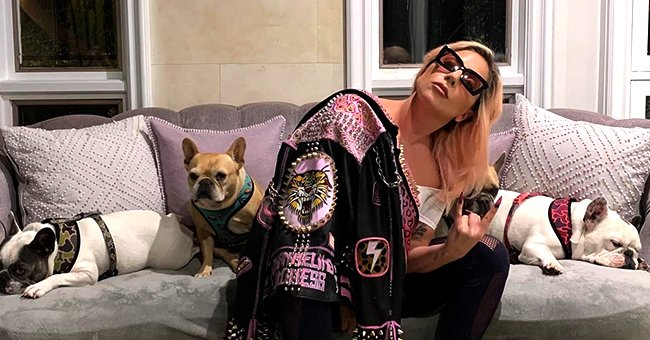 Lady Gaga's Dog Walker Goes Back to Work 3 Months after Armed Robbery on Him & Her French Bulldogs