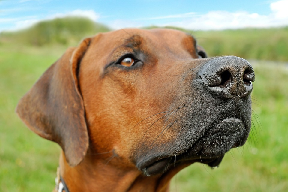 Perro alerta / Imagen tomada de: Pixabay