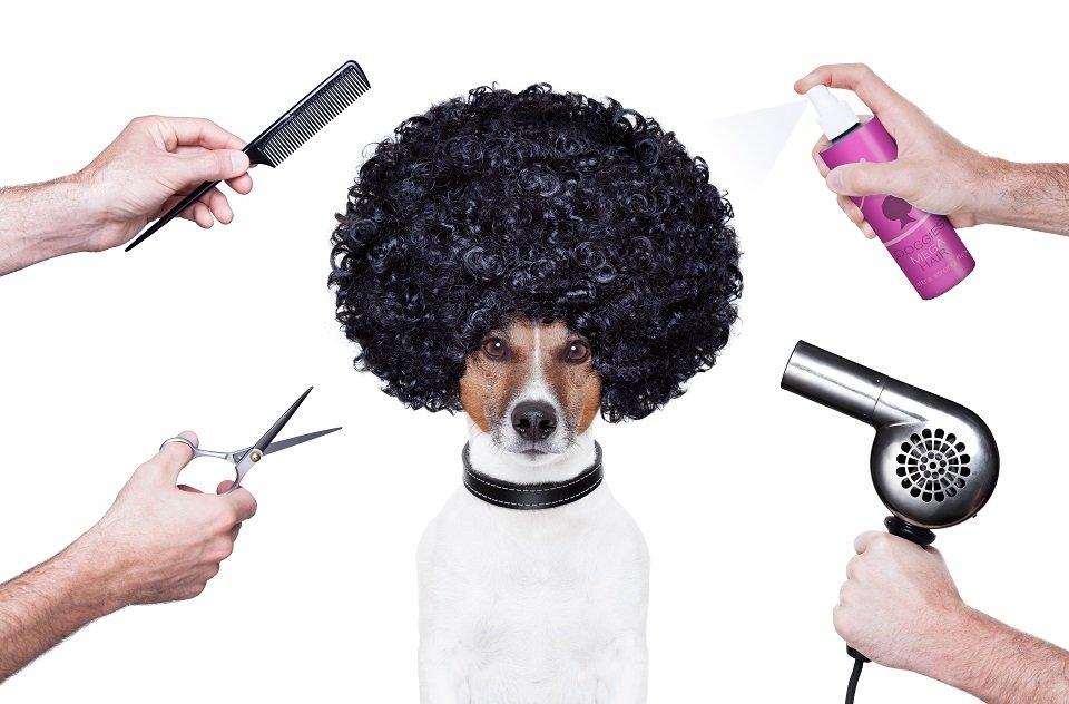 Perro en la peluquería| Foto: Shutterstock
