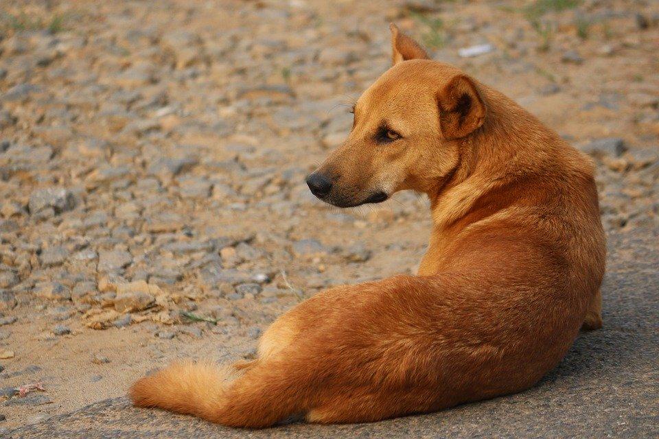 Un chien dans la rue │Image : Pixabay