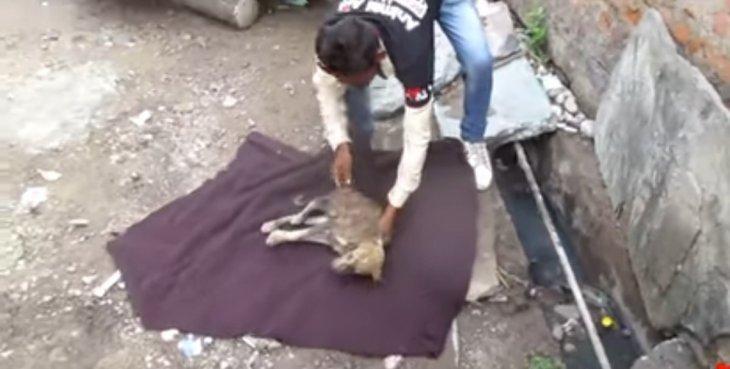Rescate de perrito en alcantarilla. | Imagen: YouTube/Animal Aid Unlimited, India