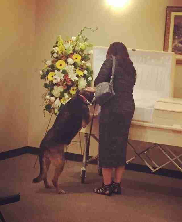 Sadie at her owner's funeral | Photo: Twitter/lulu459