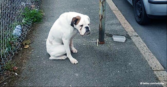 Ce chien effrayé, abandonné et enchaîné à un lampadaire, a finalement trouvé une famille aimante