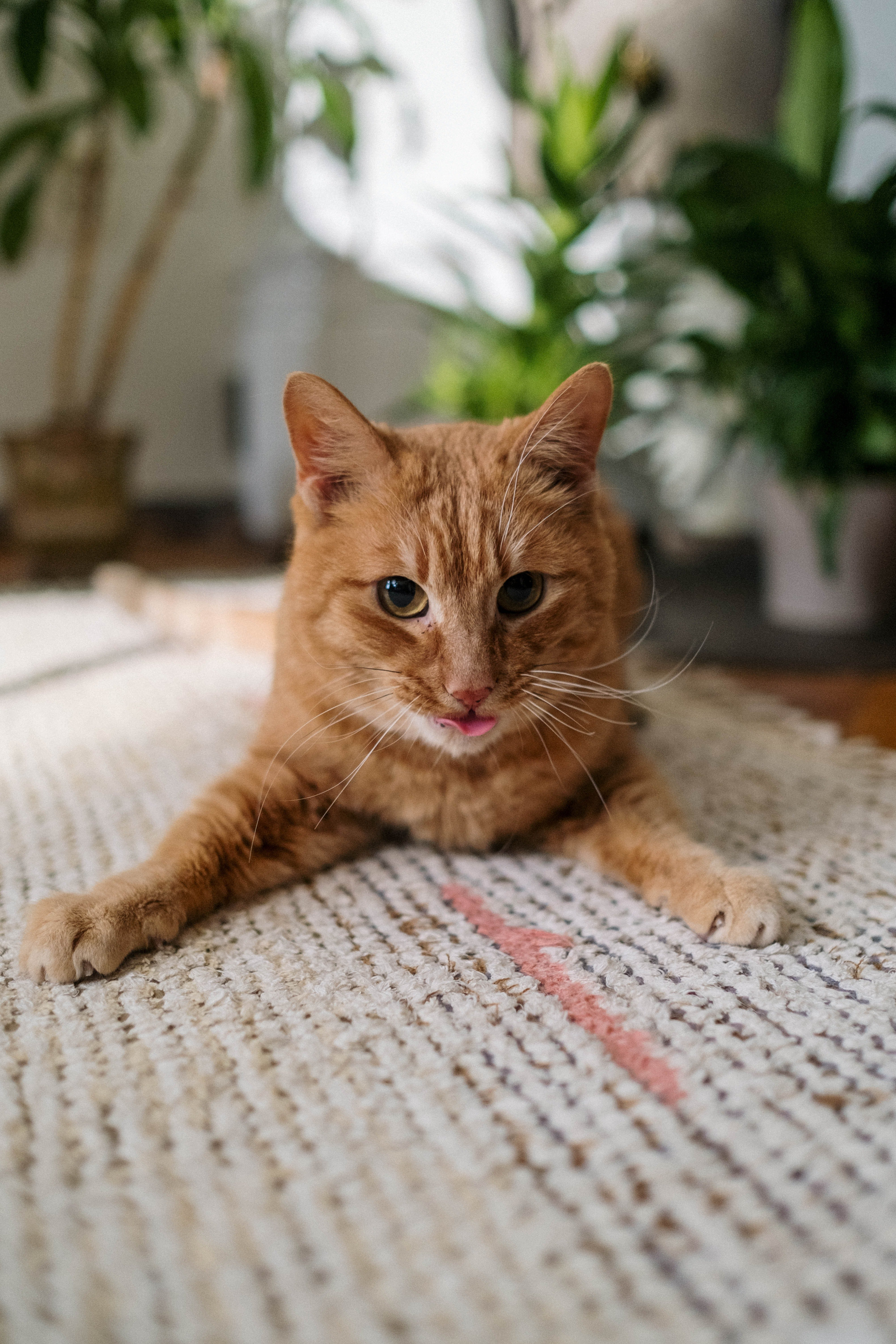 A ginger cat relaxes on a mat with its tongue out | Photo: Pexels/cottonbro