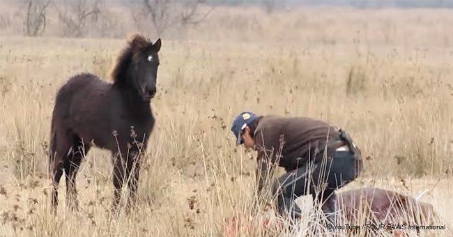 """L'homme a sauvé un cheval sauvage aux pattes enchaînées et a reçu un """"grand merci"""" en retour"""