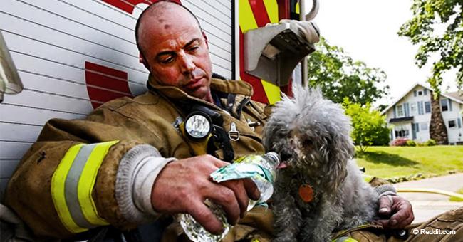 Des pompiers courageux qui risquent leur vie pour sauver des animaux