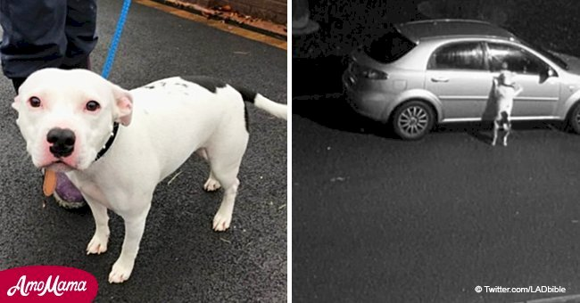 Heartbreaking footage shows dog trying to get back into a car after being abandoned on the road