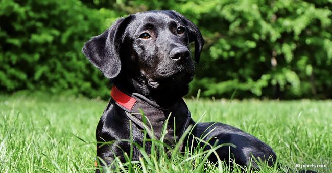 Perro adoptado hace 9 meses hace ganar $1 millón a su familia amorosa